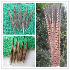 Wholesale 10-500 pcs beautiful natural pheasant tail feather 30-60 cm 12-24 inch