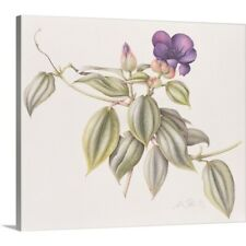 Premium Thick-Wrap Canvas Wall Art entitled Glory Flower (Tibouchina Urvilleana)