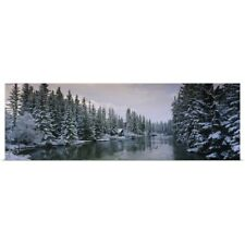 Poster Print Wall Art entitled Evergreen trees covered with snow, Policemans