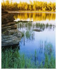 Poster Print Wall Art entitled Reflection of trees in water, Canyon Lake,