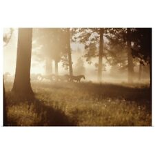 Poster Print Wall Art entitled Horses running in forest, early morning mist,