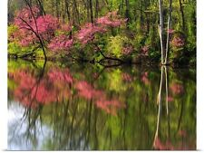 Poster Print Wall Art entitled Morning light on Redbud trees at Lost Pond;