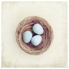 Poster Print Wall Art entitled Bird nest with blue baby robins eggs against