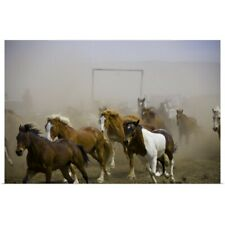Poster Print Wall Art entitled Horse drive, horses returning to the corral