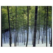 Poster Print Wall Art entitled Trees in a snow covered forest, Kyoto City, Kyoto