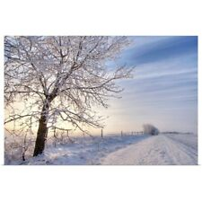 Poster Print Wall Art entitled Hoar Frost Covered Tree Along A Snow Covered Road