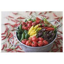 Poster Print Wall Art entitled Assorted Multicolored Chili Pepper in Bucket