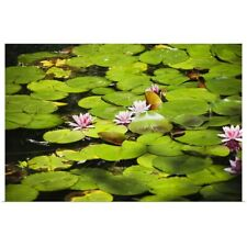 Poster Print Wall Art entitled Water lilies with lily pads in a pond