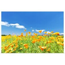 Poster Print Wall Art entitled Poppies in field, Kanagawa Prefecture, Japan