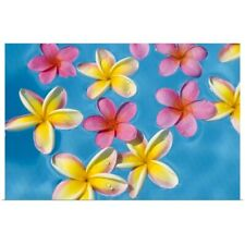 Poster Print Wall Art entitled Bright Yellow And Pink Plumeria's Floating In