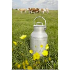 Poster Print Wall Art entitled Milk Can and Cows in Field, Havneby, Syddanmark,