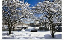 Poster Print Wall Art entitled Snow Covered Trees, Winter Scenic, South Branch