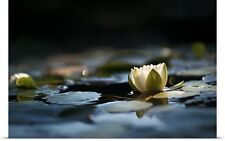 Poster Print Wall Art entitled Reflection Pond