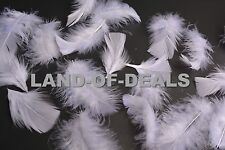 80+ White or Natural White turkey feathers loose small body feathers 0.5 oz