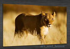 Oil Painting HD Print Wall Decor Art On Canvas,Lions Animals 24x36(Unframed)