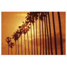 Poster Print Wall Art entitled Palm trees at sunset, San Diego