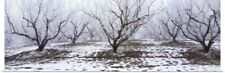 Poster Print Wall Art entitled Apple orchard covered in winter frost, Idaho