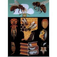 Poster Print Wall Art entitled Bees - Vintage Educational Poster
