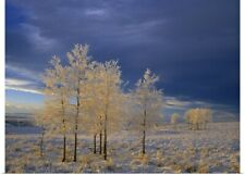 Poster Print Wall Art entitled Hoar Frost On Trees In Rural Pastureland Near