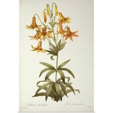 Poster Print Wall Art entitled Lilium Penduliflorum, from `Les Liliacees, 1811