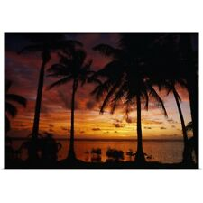 Poster Print Wall Art entitled Silhouette of palm tree on the coast at sunrise,
