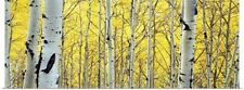 Poster Print Wall Art entitled Aspen trees in a forest