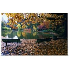 Poster Print Wall Art entitled Autumn color trees and fallen leaves along pond,