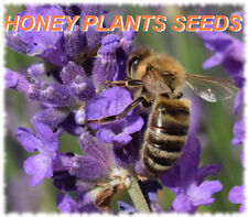 Bee Honey Plant Herb Seeds  Lavender, Rosemary, Sage, Thyme, Borage, Chives