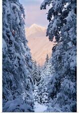 Poster Print Wall Art entitled Winter scenic of snow covered spruce trees and