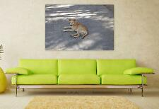 Stunning Poster Wall Art Decor Dog Bug Mutts Animal Canine Pet 36x24 Inches