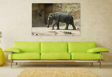 Stunning Poster Wall Art Decor Elephant Zoo Wild Animals 36x24 Inches