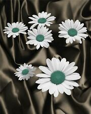 Daisy Aglow - Teal Floral Home Decor Picture Wall Art Living room