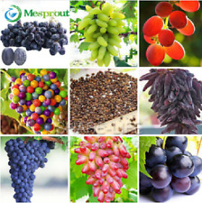 50Pcs/Pack 12 Kinds of Natural Growth Grapes Sweet Kyoho Grapes Seeds