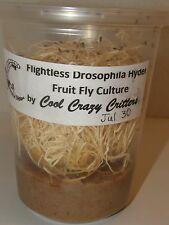 PRELOADED Hydei FRUIT FLY CULTURE 100% Organic AFFORDABLE + ROBUST