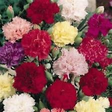 Outsidepride Carnation Chabaud Flower Seed Mix