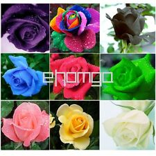10pcs Colorful Rare Outstanding Garden Plants Flower Rose Seed Lover Gift