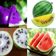 10pc Rare Sweet Watermelon Seeds Vegetable Fruits Seed New Purple Blue SKU142563