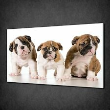 ENGLISH BULLDOG PUPPIES ANIMALS CANVAS PRINT PICTURE WALL HANGING FREE UK P&P