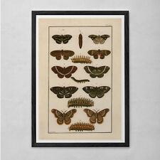 VINTAGE BUTTERFLY PRINT- High Quality Reproduction - Nature Art Print Butterfly