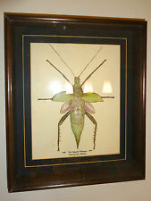 GREEN TREE NYMPH STICK INSECT TAXIDERMY DISPLAY CASE
