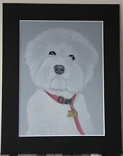 Bichon Frise - Original Pastel Drawing or Print mounted to 8x10 inches