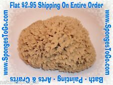 NATURAL WOOL SEA SPONGE PAINT FAUX PAINTING BATH ARTS & CRAFTS BATHING SPONGES