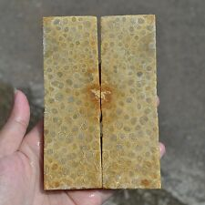 1 Pair Natural Fossil Coral Stone Blank Knife Handle Scales Pistol Grip #39
