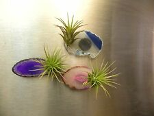Tillandsia airplant Sliced Agate geode magnet