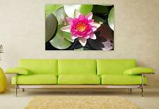 Stunning Poster Wall Art Decor Lotus Lily Pad Nature Lily Flower 36x24 Inches