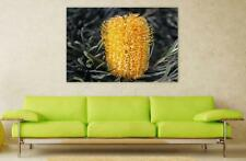 Canvas Poster Wall Art Print Decor Hairpin Banksia Banksia Spinulosa