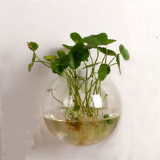 "1pc Wall Bubble Terrarium Air Plant Planter Vase Wall Mounted Glass 4""or5""or6"""