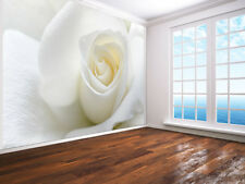 White Rose with soft white petals close up photo Wallpaper wall mural (9187778)