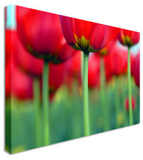Large Red Tulip Bums Canvas Pictures Wall Art Prints