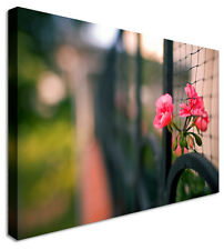 Lonely Pink Flower In Fence Canvas Prints Wall Art Picture Large Any Size